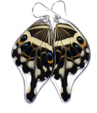 Butterfly earrings, Central Emperor Swallowtail Butterfly, bottom wings