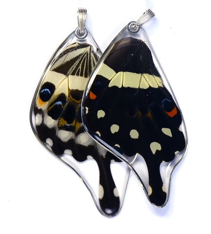 Butterfly wing pendant ONLY, Central Emperor Swallowtail Butterfly, bottom wing