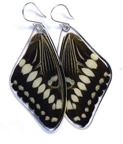 Butterfly earrings, Central Emperor Swallowtail Butterfly, top wings