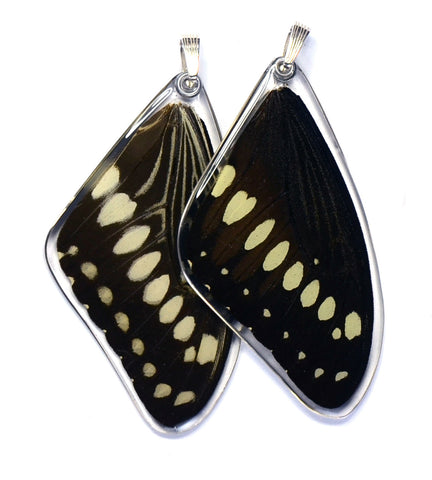 Butterfly wing pendant ONLY, Central Emperor Swallowtail Butterfly, top wing