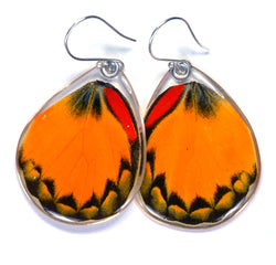 Butterfly earrings, Yellow Jezebel Butterfly, bottom wings