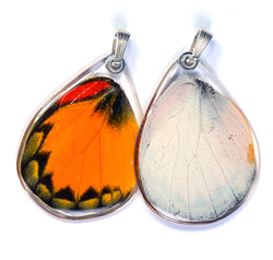 Butterfly wing pendant ONLY, Yellow Jezebel Butterfly, bottom wing