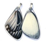 Butterfly wing pendant ONLY, Yellow Jezebel Butterfly, top wing
