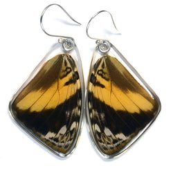 Butterfly Earrings, Blomfild's Beauty Butterfly, Top Wing