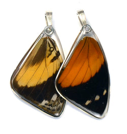 Butterfly Pendant Only, Bromfild's Beauty Butterfly, Top Wing
