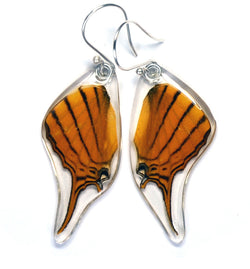 Butterfly Earrings, Orange Daggerwing, Bottom Wing