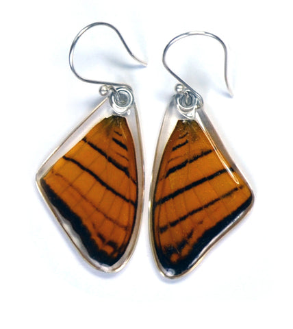 Butterfly Earrings, Orange Daggerwing, Top Wing