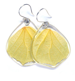 Butterfly Earrings, White Angled Sulphur, Bottom Wing