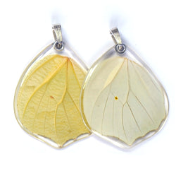 Butterfly Pendant Only, White Angled Sulphur, Bottom Wing
