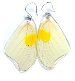 Butterfly Earrings, White Angled Sulphur, Top Wing