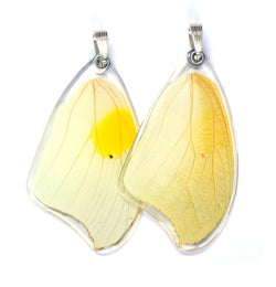 Butterfly Pendant Only, White Angled Sulphur, Top Wing
