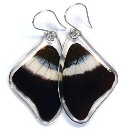 Butterfly Earrings, Violet Banded Palla, Top Wing