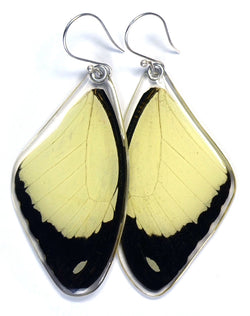Butterfly Earrings, Flying Handkerchief Swallowtail, Top Wing