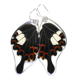 Butterfly Earrings, Papilio Helenus, Bottom Wing