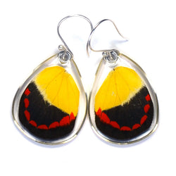 Butterfly Earrings, Timor Butterfly, Bottom Wing