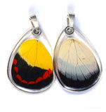Butterfly Pendant Only, Timor Butterfly, Bottom Wing