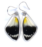 Butterfly Earrings, Timor Butterfly, Top Wing