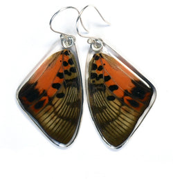 Butterfly Earrings, Shining Red Charaxes, Top Wing