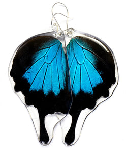 Butterfly Earrings, Mountain Blue Swallowtail, Bottom Wing