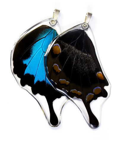 Butterfly Pendant ONLY, Mountain Blue Swallowtail, Bottom Wing