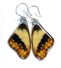 Butterfly Earrings, Herminia Glider, Top Wing