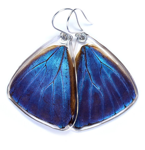Butterfly Earrings, Blue Morpho Adonis, Bottom Wing