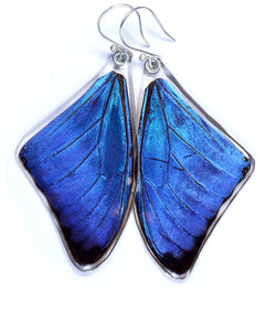 Butterfly Earrings, Blue Morpho Adonis, Top Wing