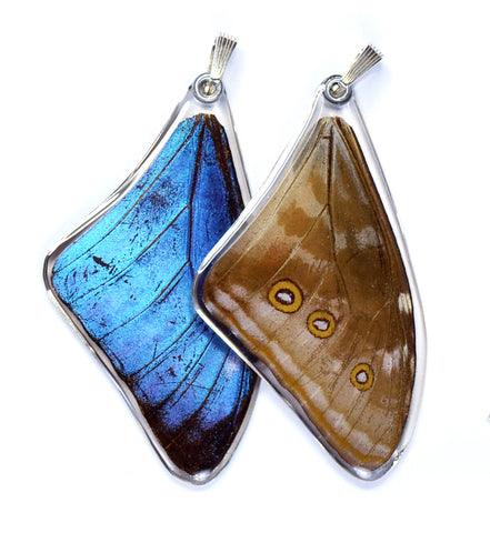 Butterfly Pendant Only, Blue Morpho Adonis, Top Wing