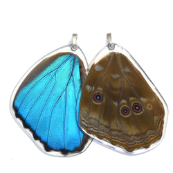 Butterfly Wing Pendant, Giant Blue Morpho, Bottom Wing