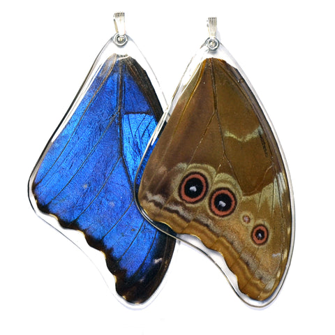 Butterfly Wing Pendant, Giant Blue Morpho, Top Wing