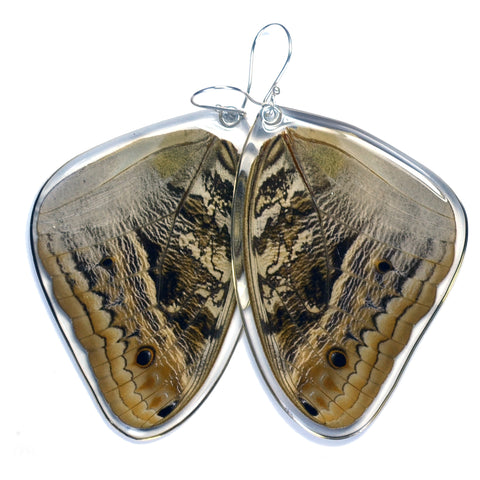 Butterfly Earrings, Owl Butterfly, Top Wing