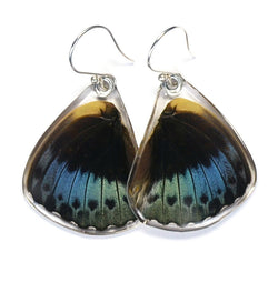 Butterfly Earrings, Archduke Butterfly, Bottom Wing