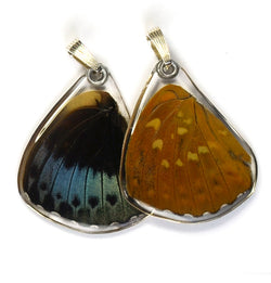 Butterfly Wing Pendant Only, Archduke Butterfly, Bottom Wing