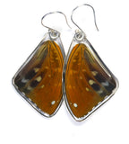 Butterfly Earrings, Archduke Butterfly, Top Wing