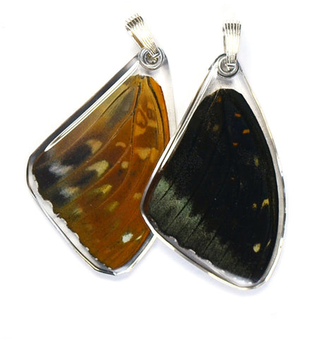 Butterfly Wing Pendant Only, Archduke Butterfly, Top Wing
