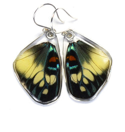 Butterfly Earrings, Day Flying Moth, Bottom Wing