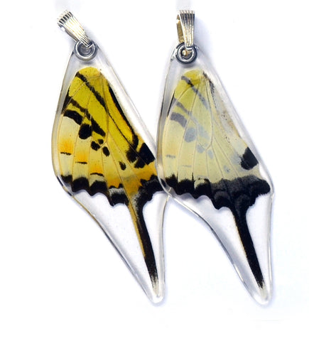 Butterfly Wing Pendant Only, Five Bar Swallowtail, Bottom Wing