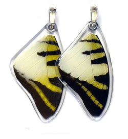Butterfly Wing Pendant Only, Five Bar Swallowtail, Top Wing