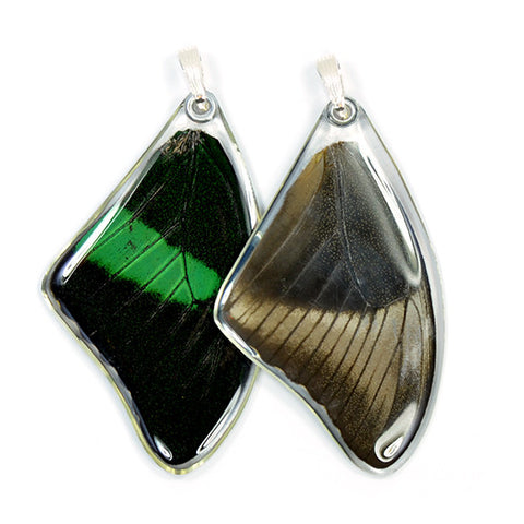 Real Butterfly Wing Pendant Only, Emerald Swallowtail, Top Wing