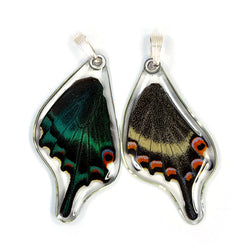 Real Butterfly Wing Pendant Only, Alpine Black Swallowtail, Bottom Wing