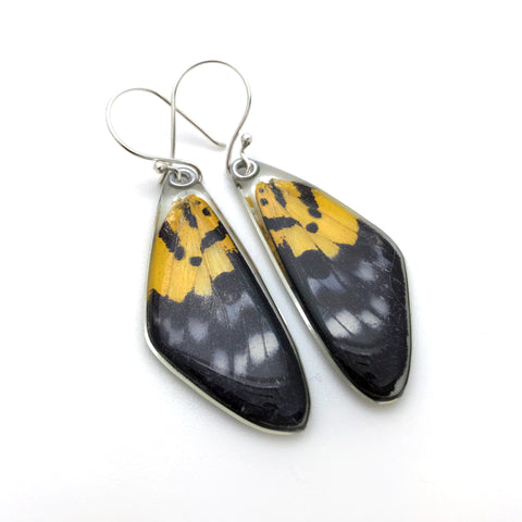 Butterfly earrings, False Tiger Butterfly, top wings