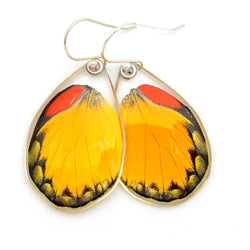 Butterfly earrings, Red Spot Jezebel Butterfly, bottom wings
