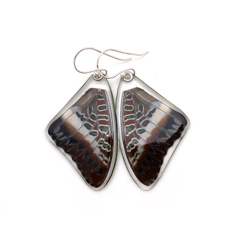 0565 Butterfly earrings, White-barred Emperor Butterfly, top wings