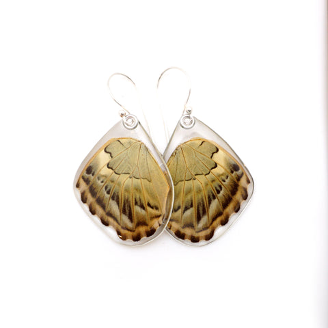 Real Butterfly earrings, Brown Clipper butterfly, bottom wings