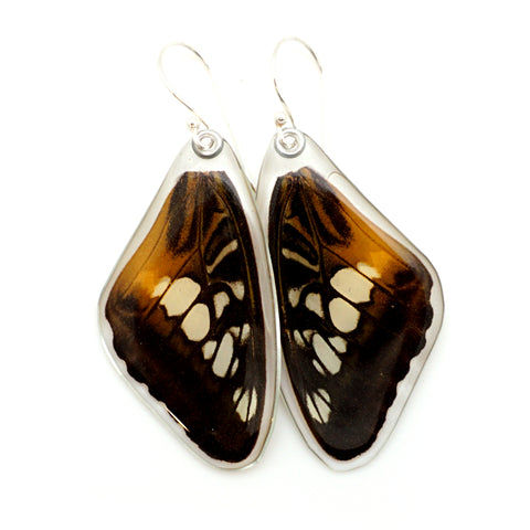 Real Butterfly earrings, Brown Clipper butterfly, top wings