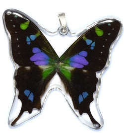 BU-0050-WP<BR>Whole Butterfly Pendant, Purple Spotted Swallowtail