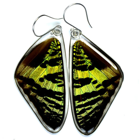 Real Butterfly earrings, Sunset butterfly, top wings