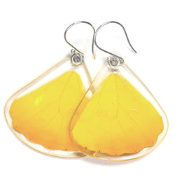 Butterfly earrings, Orange-barred Sulphur Butterfly, bottom wings