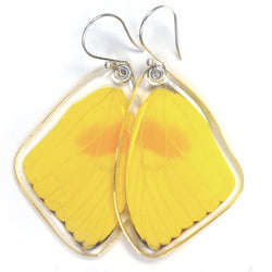 Butterfly earrings, Orange-barred Sulphur Butterfly, top wing