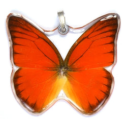BU-0080-WP<BR>Whole Butterfly Pendant, Orange Albatross
